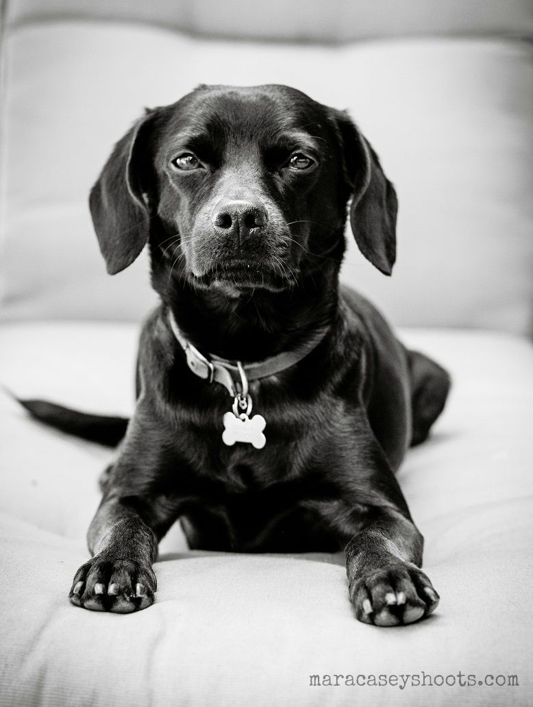 bennie judges you dogs pets dogphotography