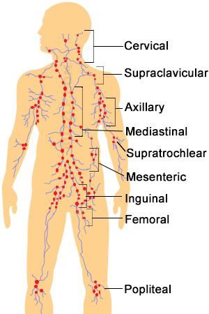 Free Diagrams Human Body Location Of Lymph Nodes In Body Pictures