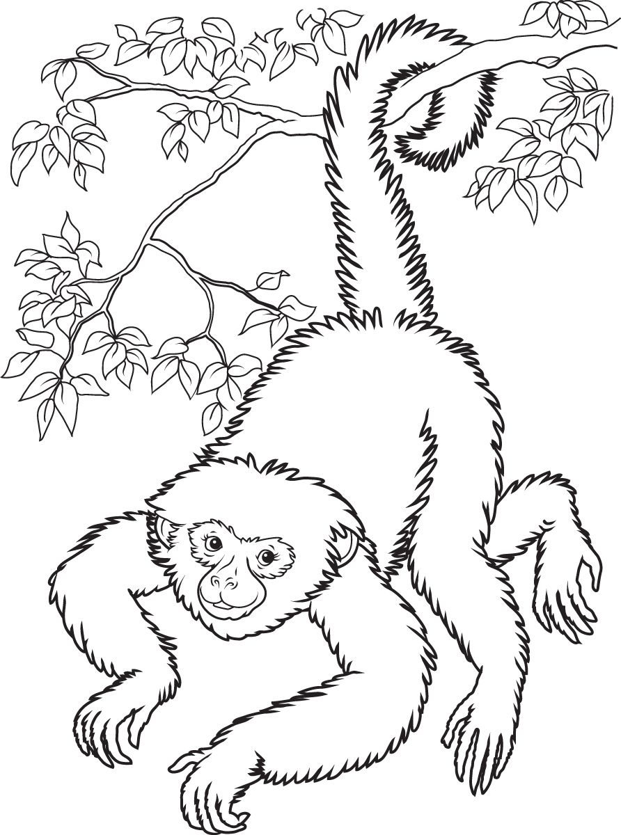 Baby Monkey Coloring Pages | Smiling Hanging Monkey Coloring Page Free  Printable Pages