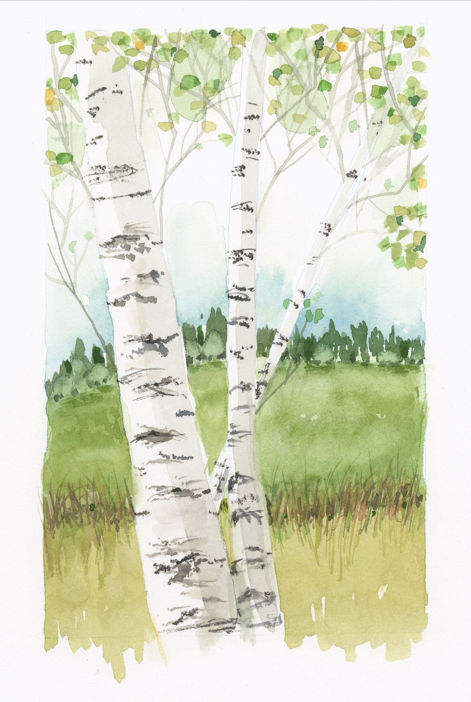 Jake Marshall Watercolor Birch Trees In Spring Tree Watercolor