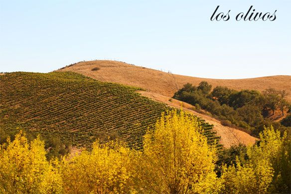 Kelly Golightly's Guide To Los Olivos