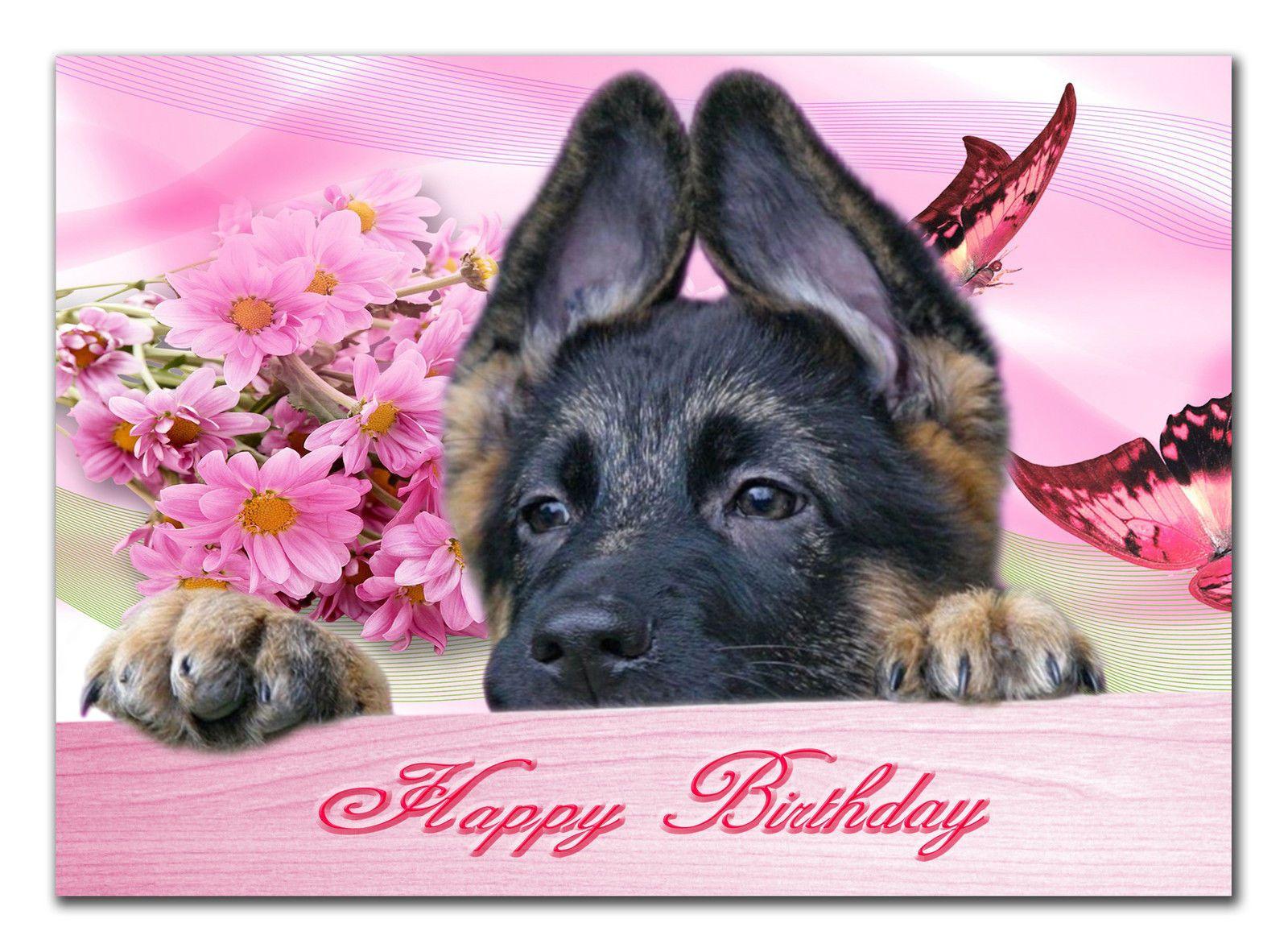 Картинки собаки овчарки спасибо за внимание, днем рождения
