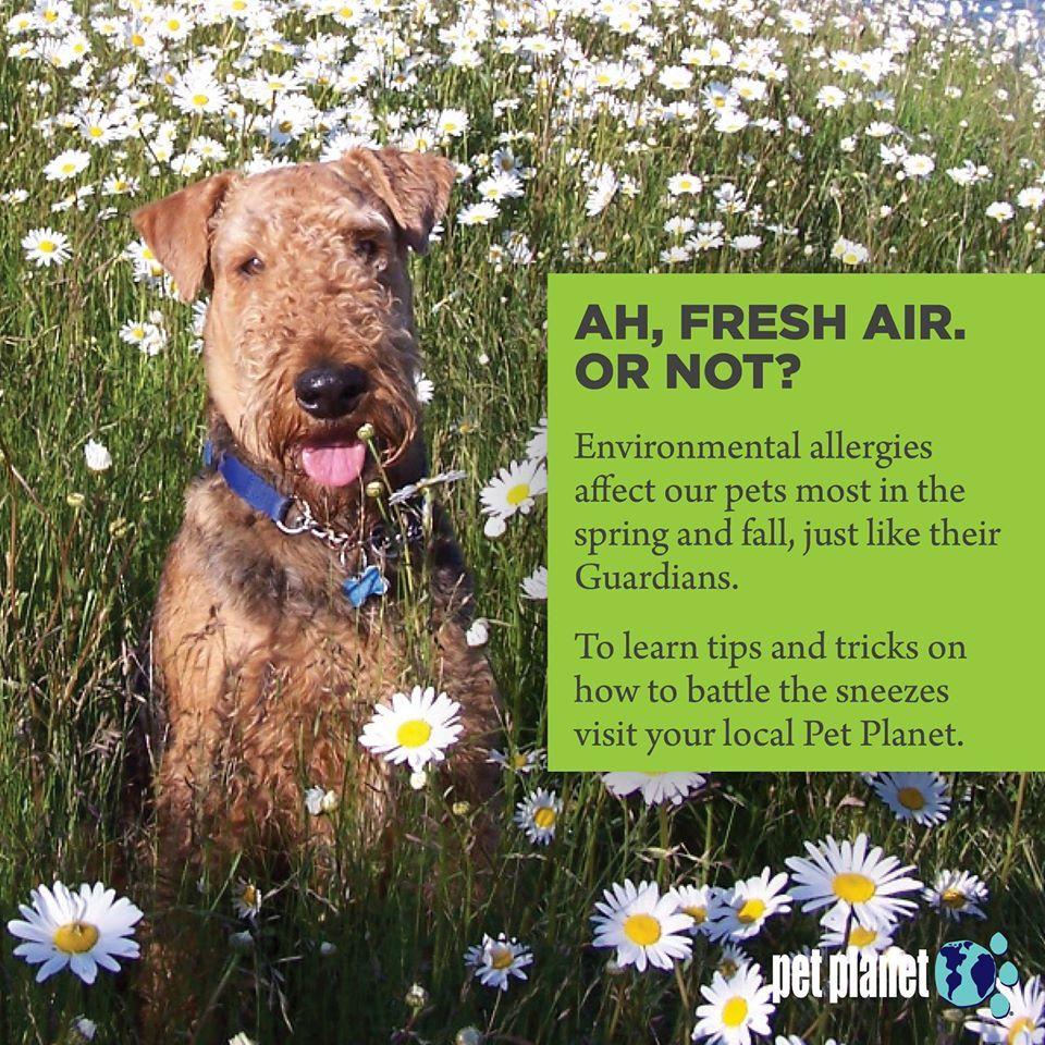 Environmental Allergies Diagnosing And Treating Atopy