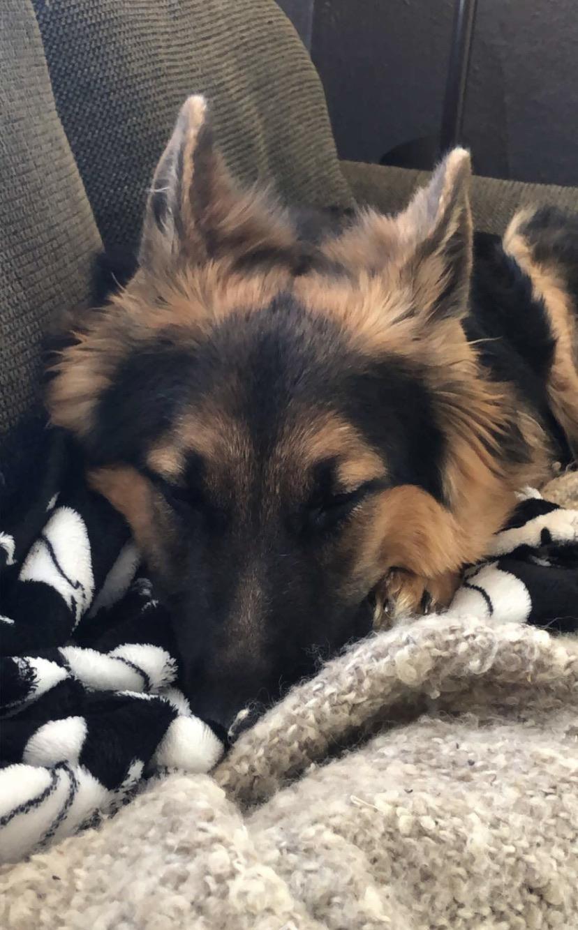 44 German Shepherd Mix Breed Reviews In 2020 Beautiful Dogs