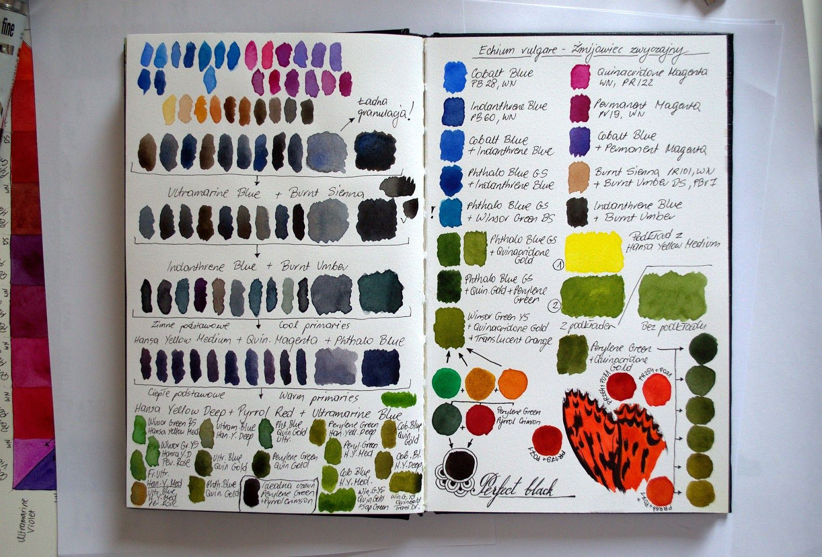 Botanical and Nature Art by Krzysztof Kowalski: Sketchbook once again