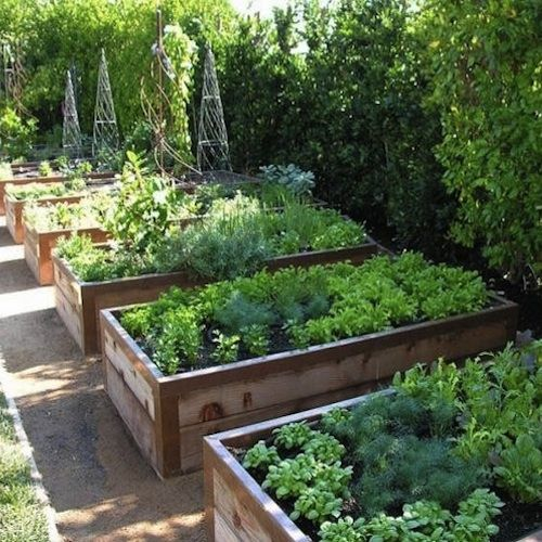 Container Gardening  Growing Vegetables In Urban Planters is part of Beautiful raised garden beds, Vegetable garden design, Diy raised garden, Raised garden, Vegetable garden raised beds, Garden layout - Container gardening with urban planters  These containers can be used to grow your own in rooftop gardens, patios, balconys, and windowsills