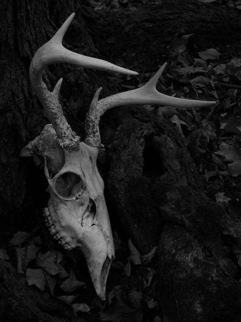 Pin de MaDSoto en Skull | Pinterest | Calaveras, Huesos y Ciervo