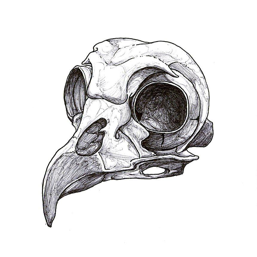 Bird Skull Outline