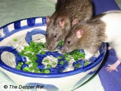 Pin by Lexxiloo on Rats in 2020 Rat toys, Cute rats, Pet