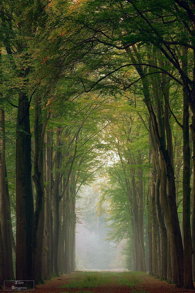 October Morning by Ellen Borggreve on 500px..... #autumn #mist #trees #landscape #fog #october #forest #nature #tree #path #fall #peaceful #corridor #atmospheric