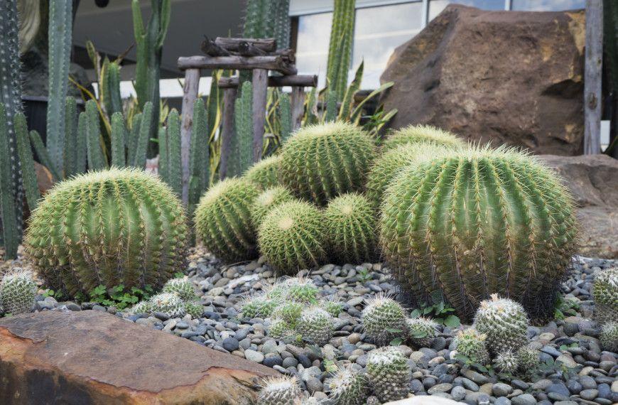 34 Sharp Cactus Garden Ideas | Jardín de cactus, El cactus y ...
