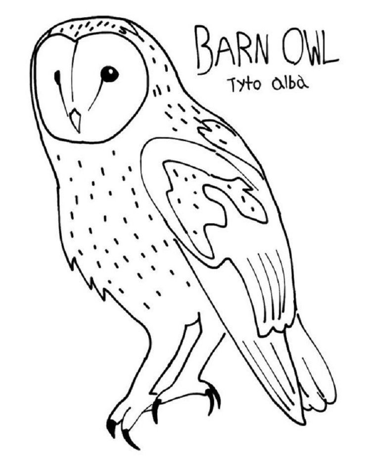 Barn Owl Coloring Pages From New Picts Category Coloringpages