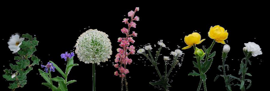 Flower Collection by *Eirian-stock on deviantART