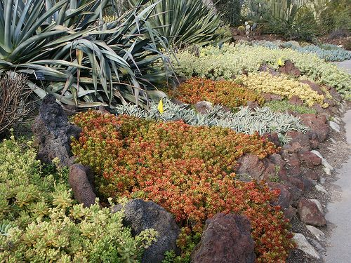 Succulent Ground Cover In Colors Huntington Library Desert Garden 0226 Ground Cover Plants Ground Cover Succulent Ground Cover