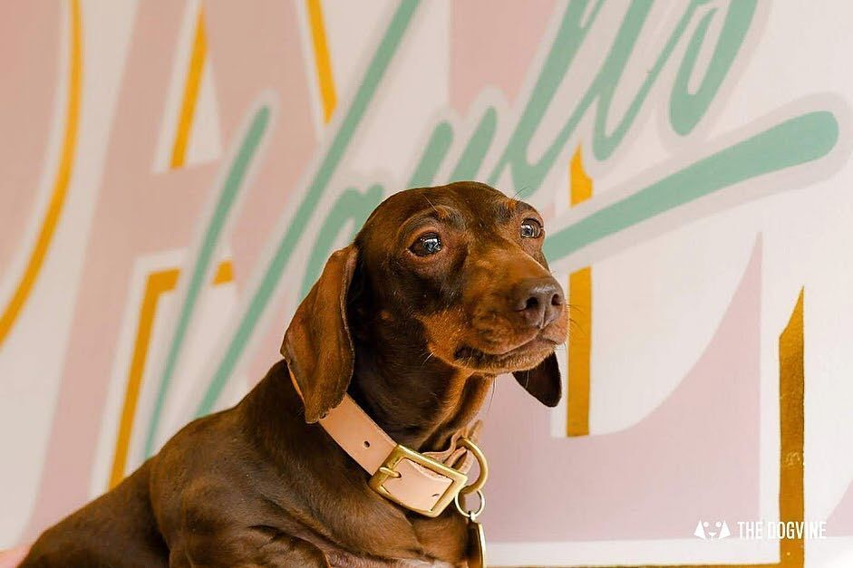 Dachshund Products Apparel And Gifts Dachshund Puppy Mills