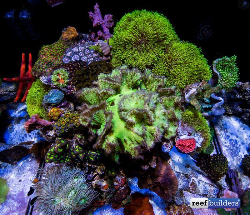 Pin On Reef Tanks