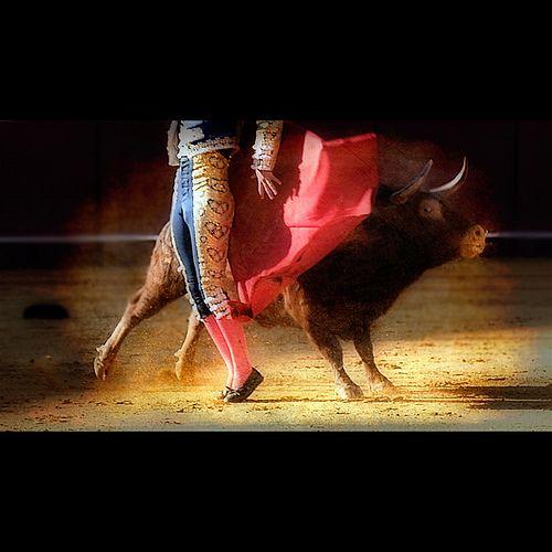 El arte de torear... Ay las nalgas de los toreros ha!