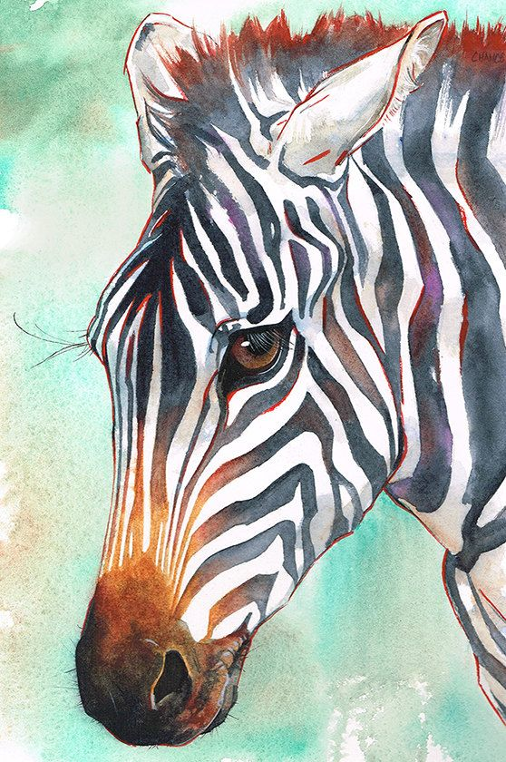Zebra Original Painting Watercolor African Wildlife Art Black And