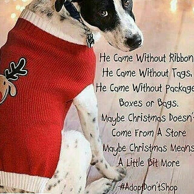Pin by Nina Moret on Doggy Moggy Shelter dogs, Animals, Dogs
