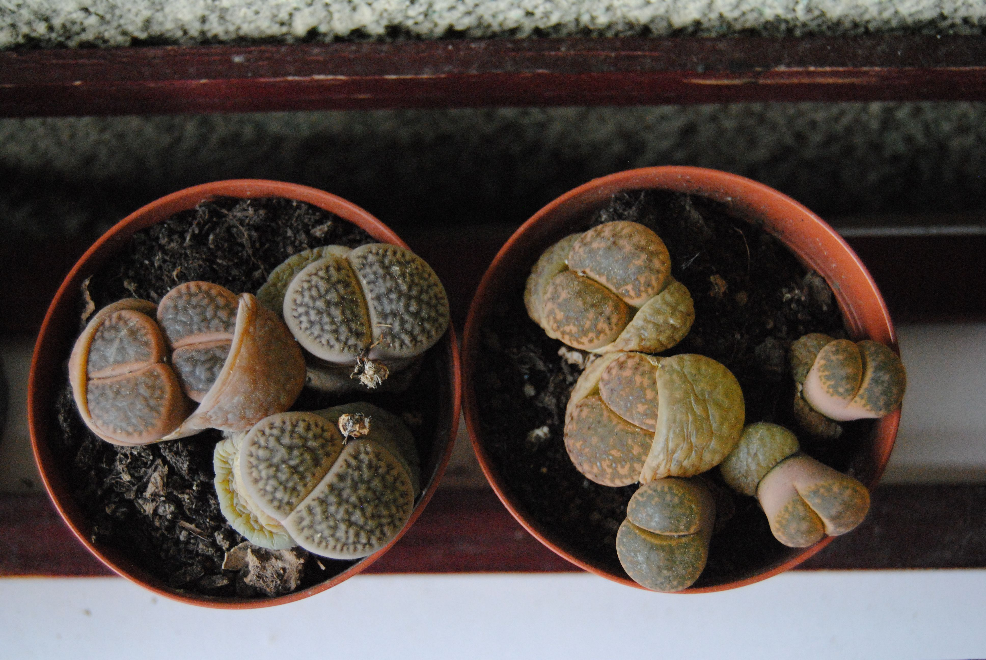 my mother's plants <3