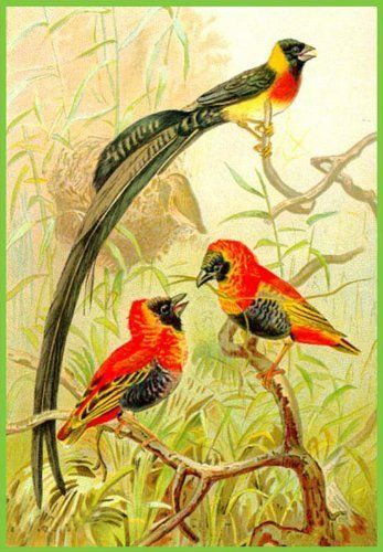 Trio Of Red Tropical Birds Etched Vinyl Stained Glass Film - Window decals for bird protection