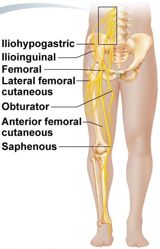 Anterior Leg Nerves Google Search Spine Pinterest Physical