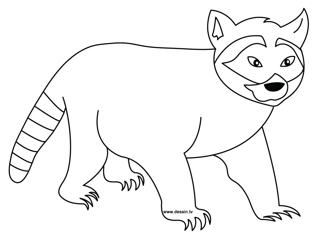 Chester Raccoon Coloring Page Raccoons Are Small Mammals That