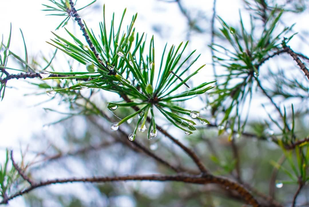 I love foggy mornings for the photos, but I do love the sunshine and blue clouds too 😍 °°°°° #landscape #landscapephotography #naturetrail #naturehike #nature #naturephotography #naturelovers #plant #pine #pineneedles #dew #dewdrops #earlymorning #foggy #cloudyday #macrophotography #photography #photographer #adobelightroom #lightroomedits #adventurevisuals #hiking_my_life #girlswhohike #summit #wanderlust #georgiamountains #explore
