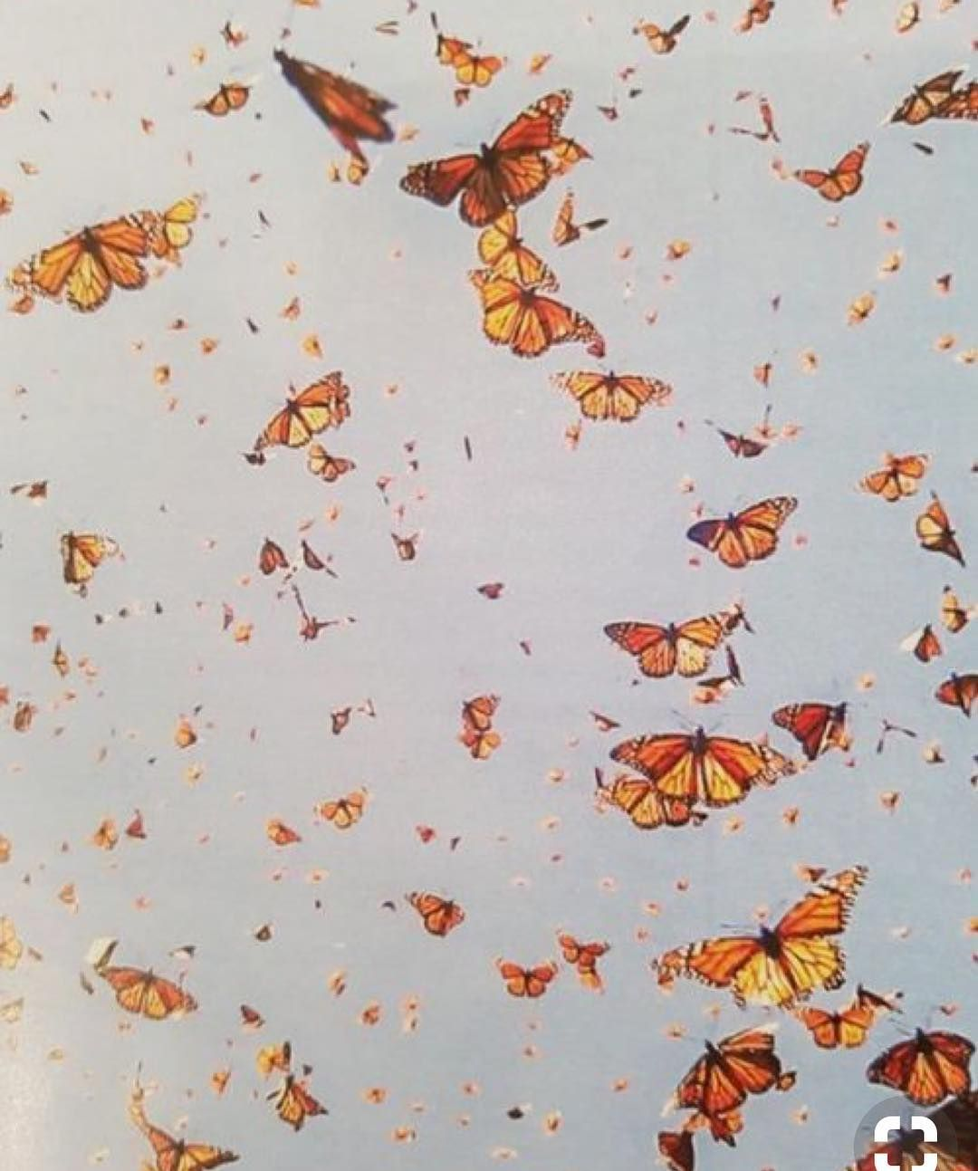 L Academie On Instagram Feeling Butterflies Aesthetic