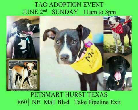 Sunday, June 2, 2013, come to an adoption event from 11 AM