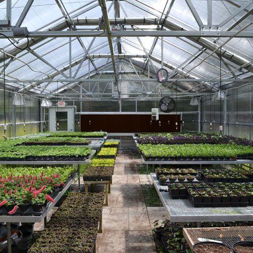 Jaderloon Appalachian Greenhouse Garden Plants Retail