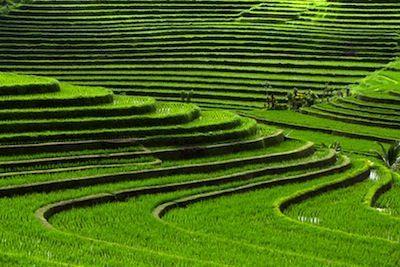 Terrazze di riso, Bali, Indonesia | Paesaggi | Pinterest | Bali ...