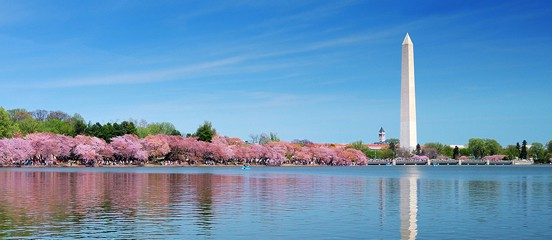 National Cherry Blossom Festival March 20th To April 13th 2020 Cherry Blossom Festival Cherry Blossom Family Friendly Activities