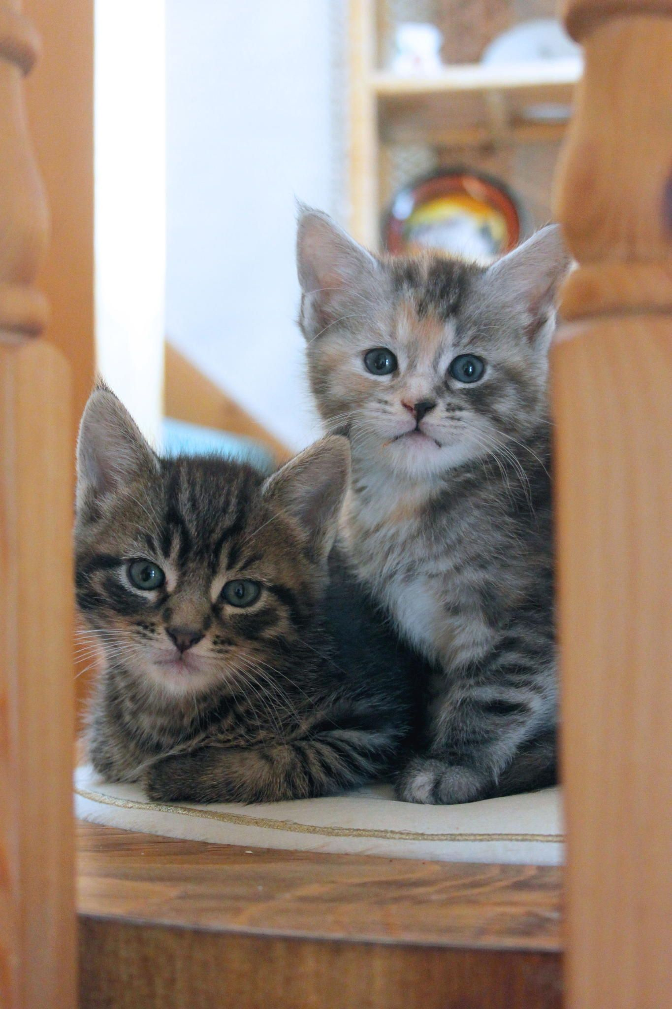 Two Kittens On A Box Kittens Cats Pretty Cats