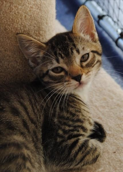 Today Is Your Lucky Day Our Shelters Are At Capacity During This Time Of Year And There Will Be Only More Litters Of Kittens Cute Animals I Love Cats Animals