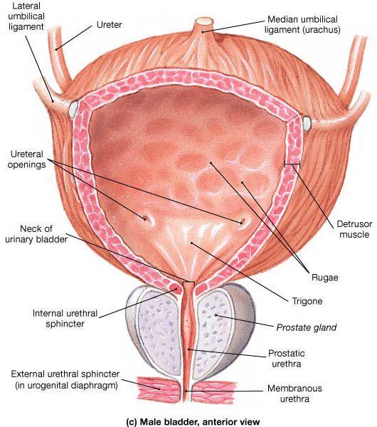uretral medicina natural