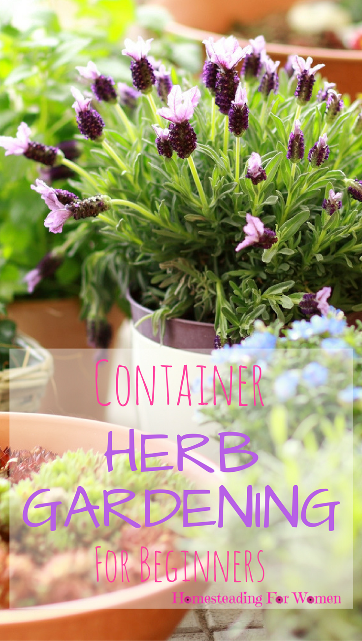 Lovely Container Herb Gardening For Beginners