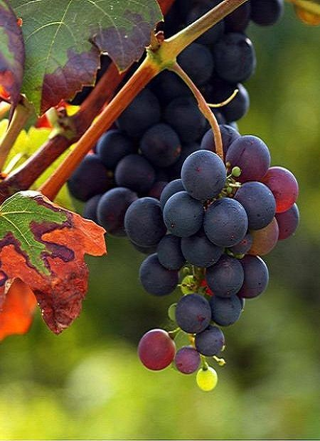Die Farben Des Herbstes Des Die Farben Herbstes Hrozno