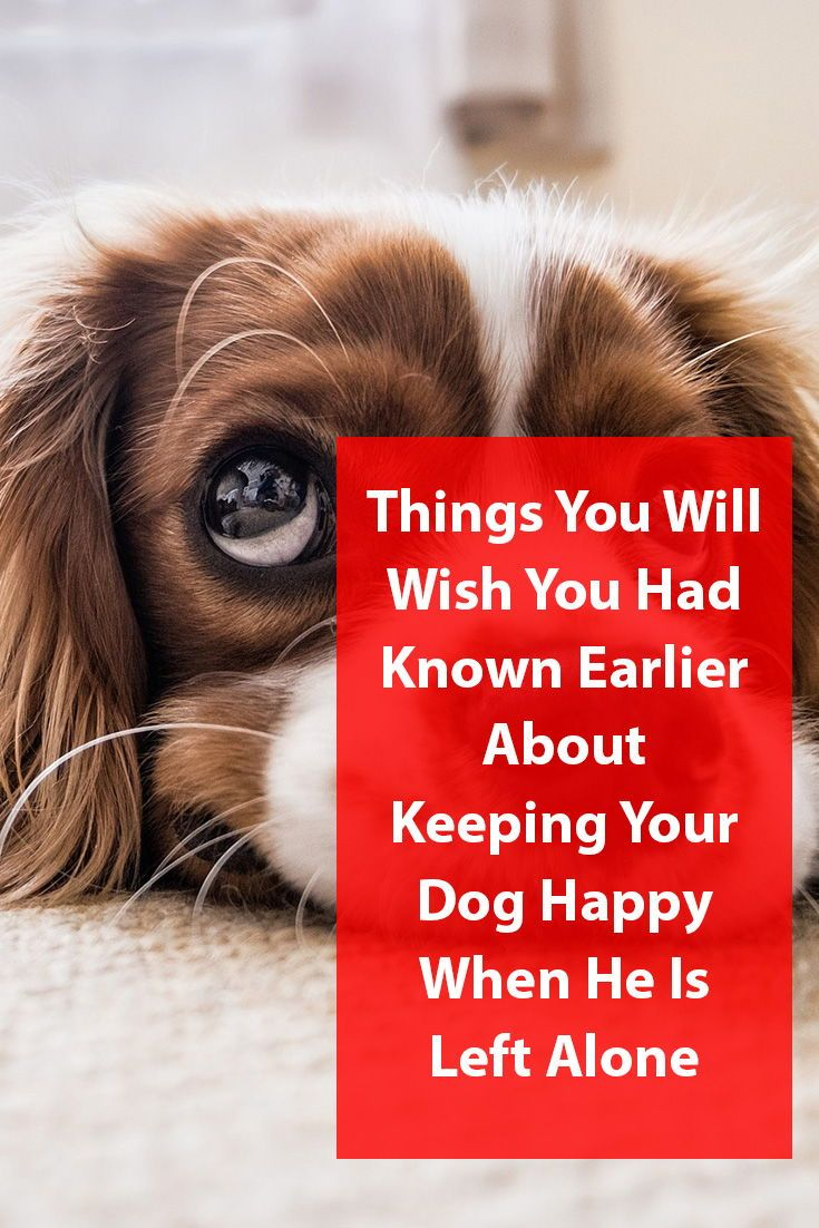 Keeping Your Dog Happy When He Is Left Alone Dogs Left Alone