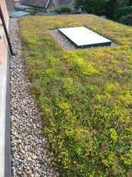 Green Roof Sedum Matting Edengro Co Uk With Images Roof Garden Sedum Roof Roof Cladding