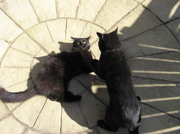 Say Hi To Hugh And Teddy The Original Simon S Cat And Kitten