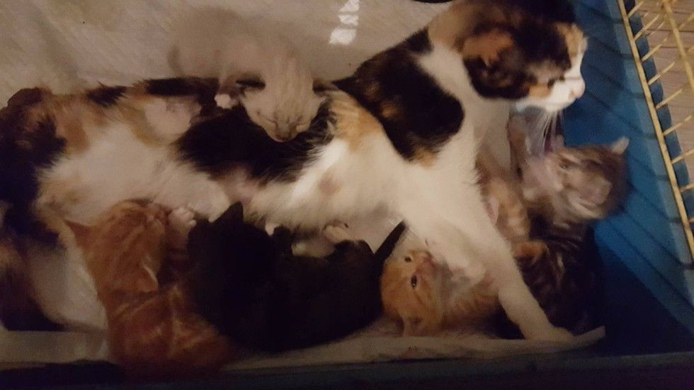 A Calico Cat Mother Is Paralyzed In Her Hindquarters But Nothing Can Keep Her Away From Her Kittens She Dragged Herself To Her Babi Cat Mom Kittens Cat Furry
