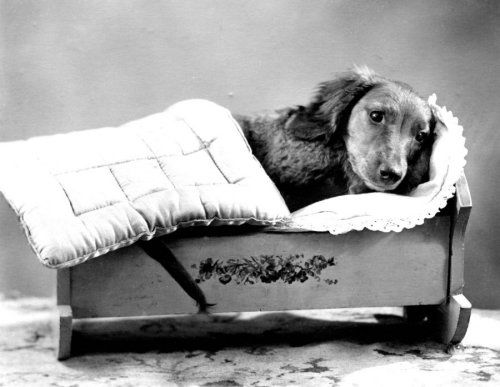 Dachshund lying in a cradle, Anonymous Prints from Easyart.com