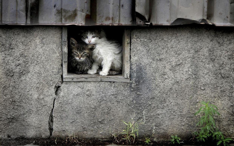 Julie Turner Feral Cats Feral Cat Shelter Cats