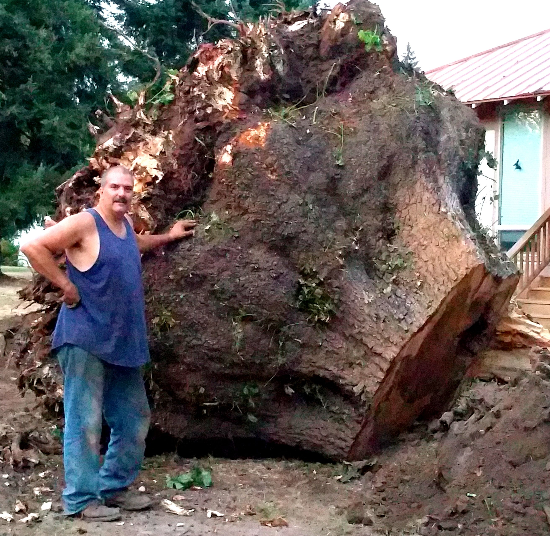 Large maple burl wood slab dreams pinterest woods for Unusual bonsai creations