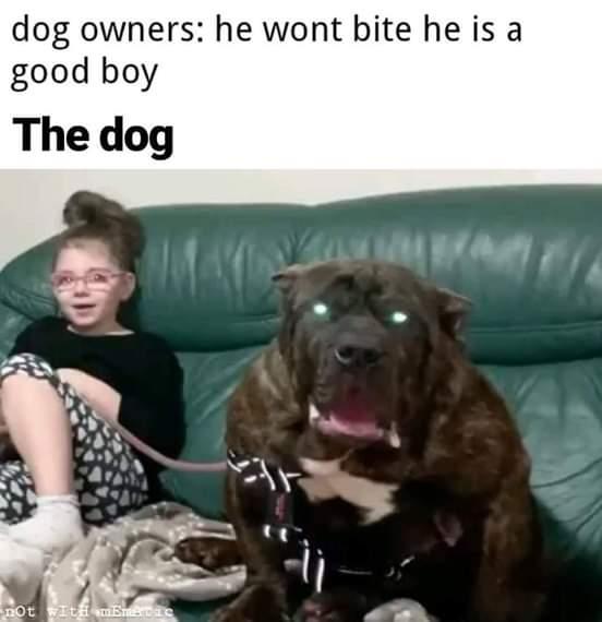 55 Clean Humor Memes Best Clean Funny Picture In 2020 Clean Funny Pictures Funny Relatable Memes Funny Animal Memes