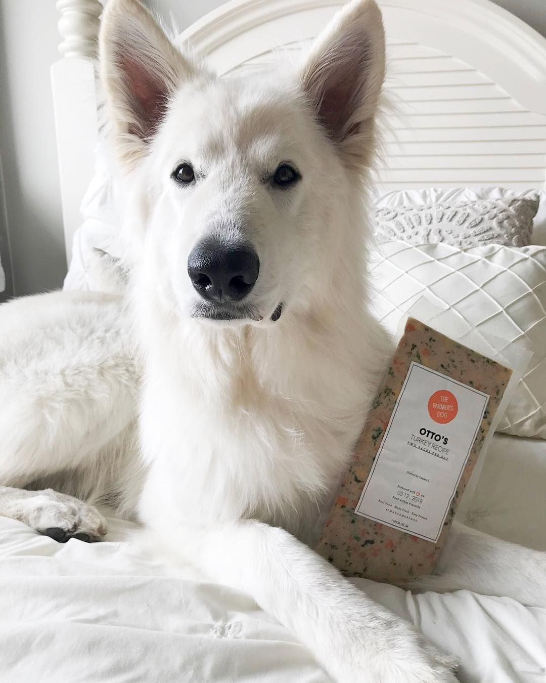 Fresh food for huskies dog food recipes homemade dog