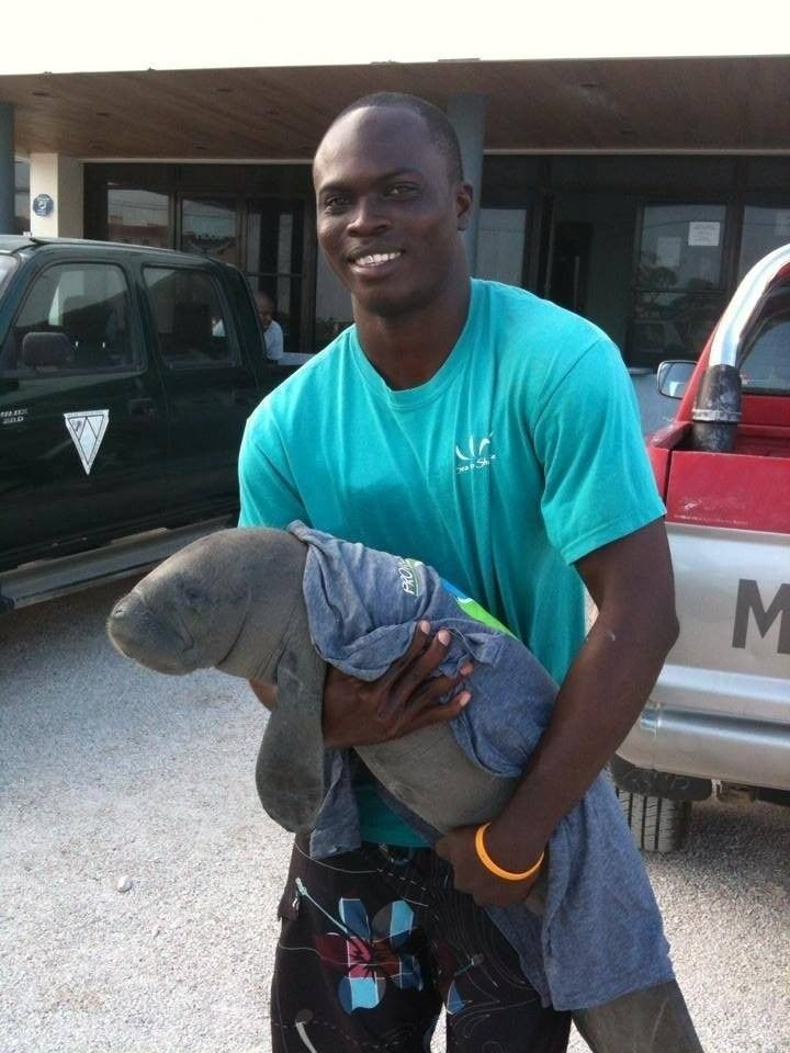 Meet The Man Saving Belize's Manatees, One Baby At A Time 8/8/2014