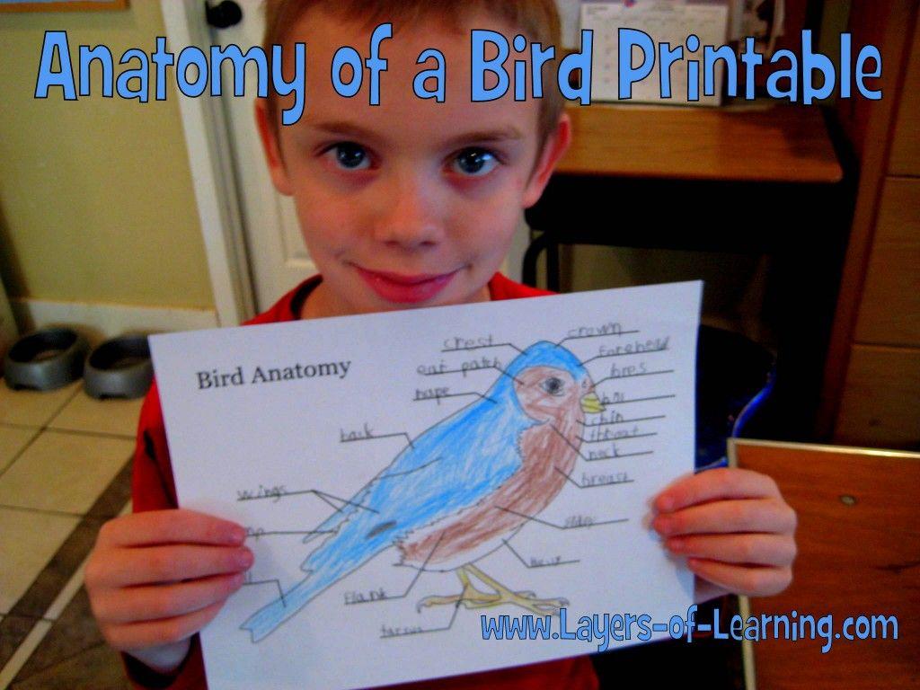 Printable Bird Anatomy Worksheet | Worksheets, Anatomy and Bird