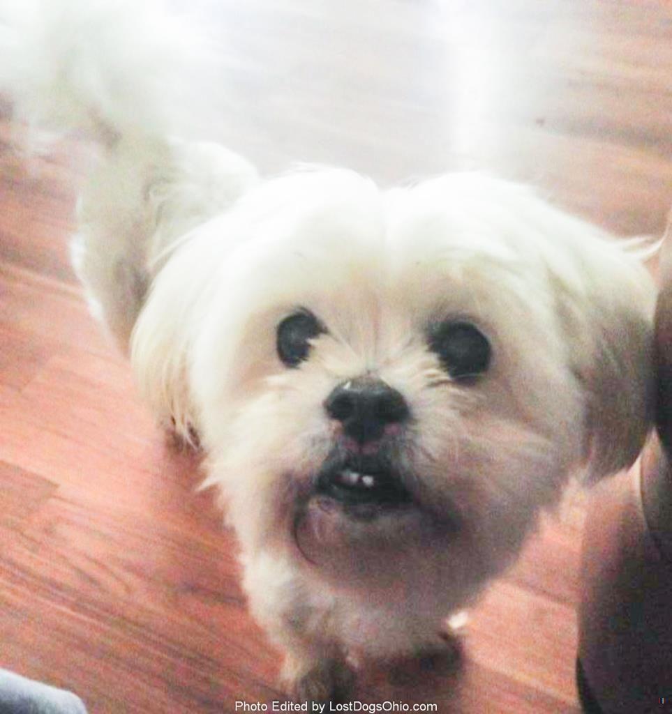 Lost Dog Female Leesburg Oh Usa 45135 Lostdog Sophie